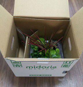 midorie-box