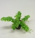 plant_img33